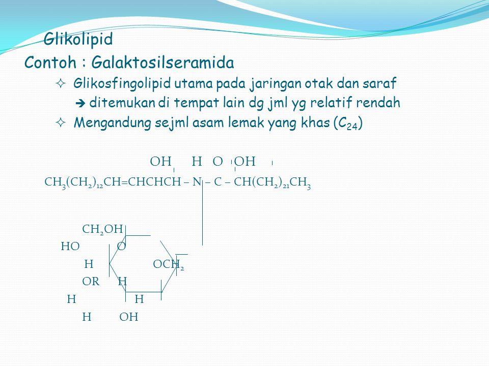 Glikolipid Contoh : Galaktosilseramida  Glikosfingolipid utama pada jaringan otak dan saraf  ditemukan di tempat lain dg jml yg relatif rendah  Men