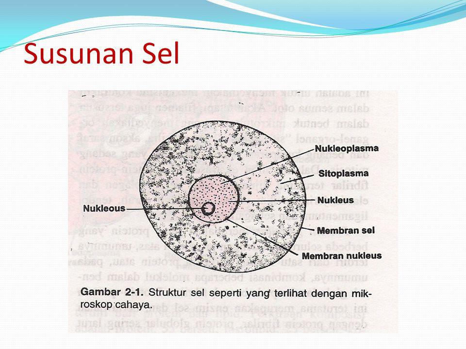 Substansi yang membentuk sel dis : Protoplasma Protoplasma terdiri atas : 2 Komponen Utama - Komponen anorganik - Komponen organik Komponen anorganik Yaitu : Air, garam-garam mineral(elektrolit), gas oksigen,karbondioksida,nitrogen dan amonia.