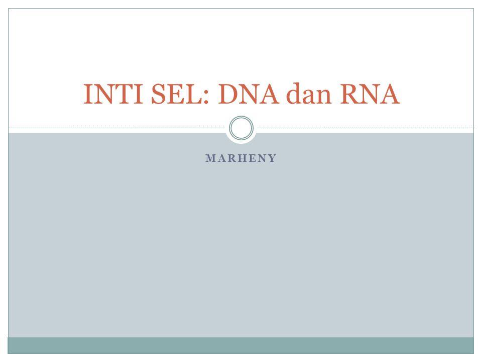 MARHENY INTI SEL: DNA dan RNA