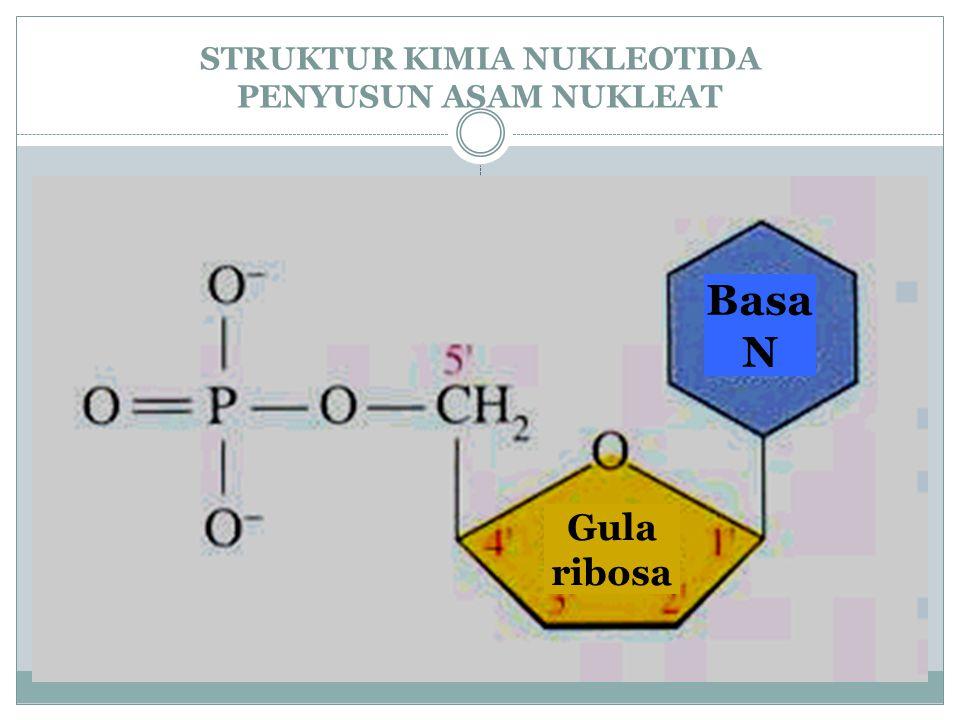 Penelitian Watson dan Crick Dengan dukungan data difraksi sinar-X dari Rosalind Franklin dan Maurice Wilkins Dengan dukungan data analisis kimia basa nitrogen dari Erwin Chargaff Memformulasikan struktur DNA Mengelompokkan basa DNA menjadi purin dan pirimidin Memformulasikan model replikasi DNA