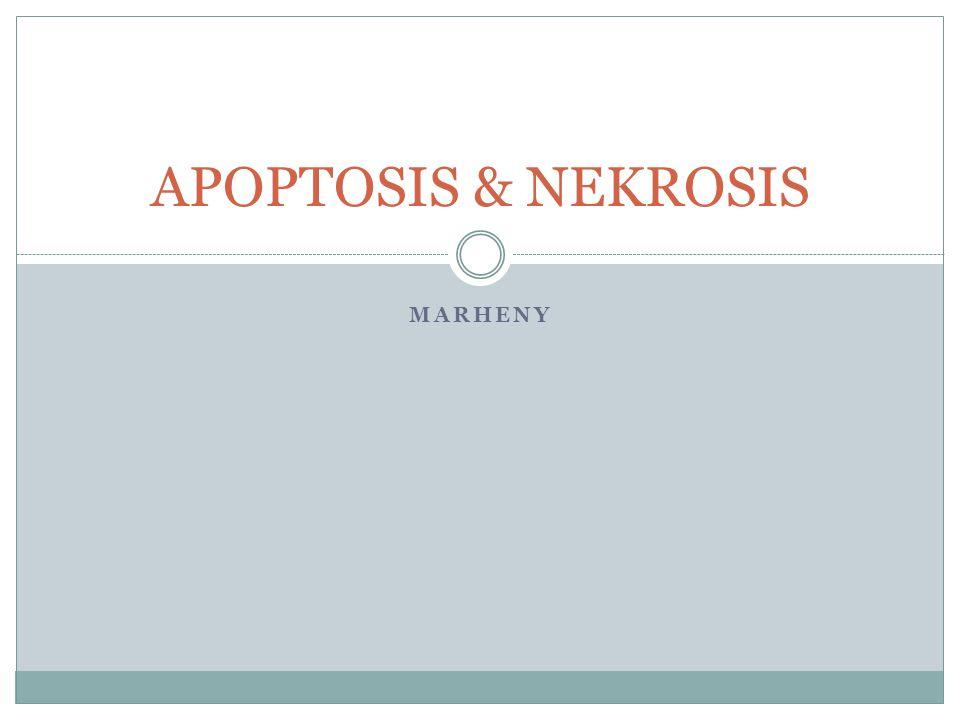 Morphology necrosis : 1.Sel membesar dan pecah 2.Kerusakan dan koagulasi protein pada sitoplasma 3.Kerusakan organel sel 4.Kerusakan DNA pada inti