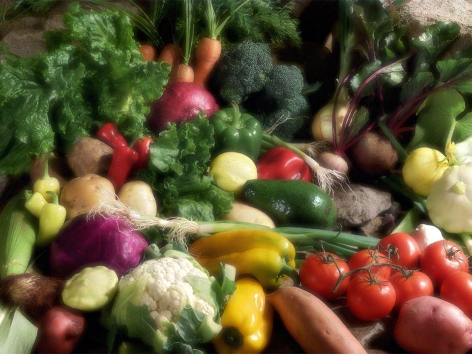 KEJADIAN 3:18 Semak duri dan rumput duri yang akan dihasilkannya bagimu, dan tumbuh-tumbuhan di padang akan menjadi makananmu ;