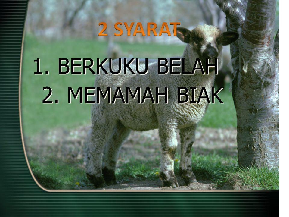IMAMAT 11:7 Demikian juga babi hutan, karena memang berkuku belah, yaitu kukunya bersela panjang, tetapi tidak memamah biak; haram itu bagimu.
