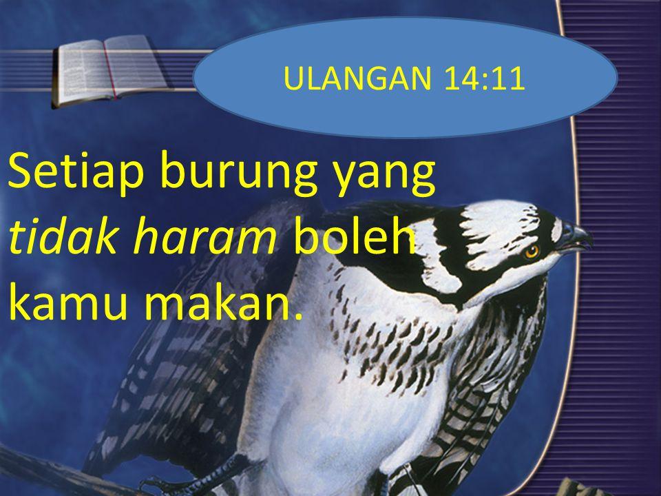 ULANGAN 14:12 Tetapi yang berikut janganlah kamu makan: burung rajawali, ering janggut dan elang laut;