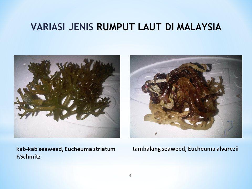 4 kab-kab seaweed, Eucheuma striatum F.Schmitz tambalang seaweed, Eucheuma alvarezii VARIASI JENIS RUMPUT LAUT DI MALAYSIA
