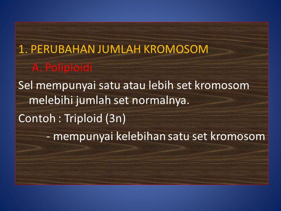 1. PERUBAHAN JUMLAH KROMOSOM A. Poliploidi Sel mempunyai satu atau lebih set kromosom melebihi jumlah set normalnya. Contoh : Triploid (3n) - mempunya