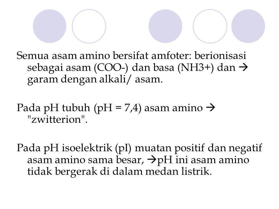 Semua asam amino bersifat amfoter: berionisasi sebagai asam (COO-) dan basa (NH3+) dan  garam dengan alkali/ asam.