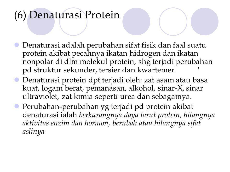 (6) Denaturasi Protein Denaturasi adalah perubahan sifat fisik dan faal suatu protein akibat pecahnya ikatan hidrogen dan ikatan nonpolar di dlm molekul protein, shg terjadi perubahan pd struktur sekunder, tersier dan kwartemer. Denaturasi protein dpt terjadi oleh: zat asam atau basa kuat, logam berat, pemanasan, alkohol, sinar-X, sinar ultraviolet, zat kimia seperti urea dan sebagainya.