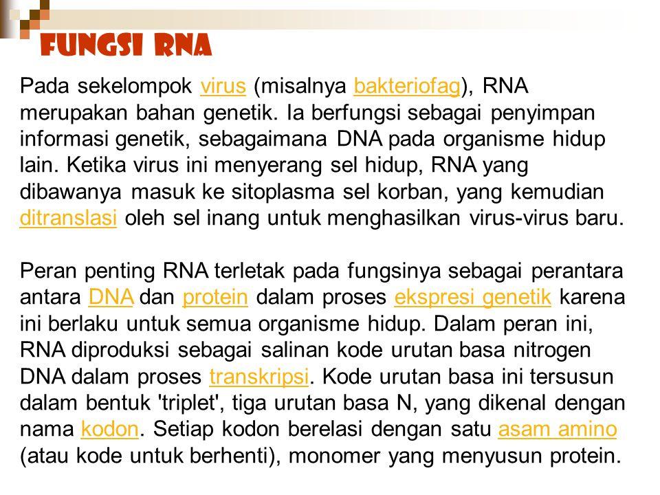 Fungsi RNA Pada sekelompok virus (misalnya bakteriofag), RNA merupakan bahan genetik. Ia berfungsi sebagai penyimpan informasi genetik, sebagaimana DN
