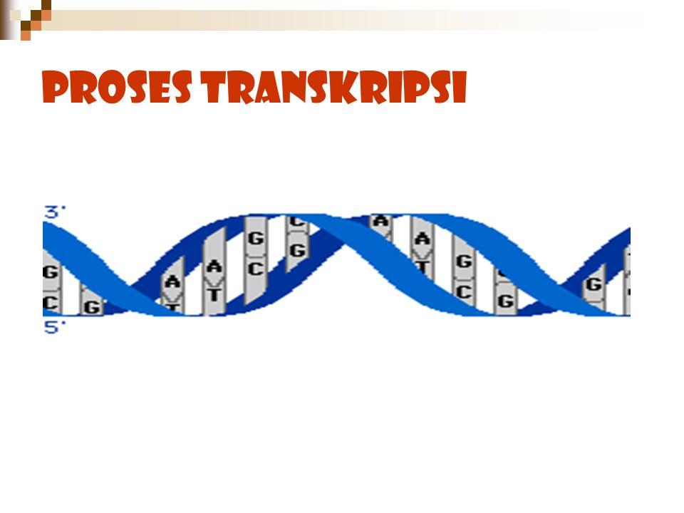 Proses Transkripsi