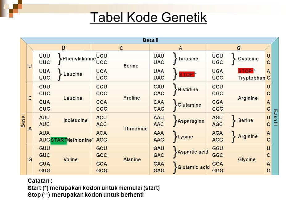 Tabel Kode Genetik Basa I Basa II Basa III Catatan : Start (*) merupakan kodon untuk memulai (start) Stop (**) merupakan kodon untuk berhenti