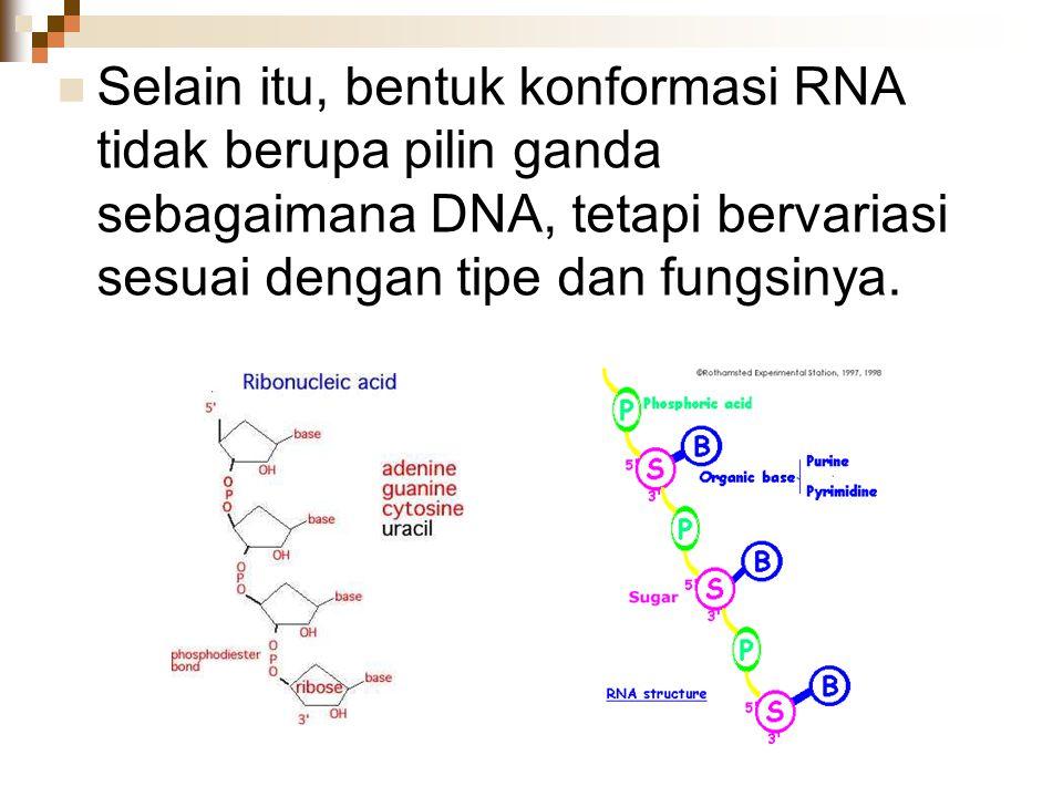 Selain itu, bentuk konformasi RNA tidak berupa pilin ganda sebagaimana DNA, tetapi bervariasi sesuai dengan tipe dan fungsinya.