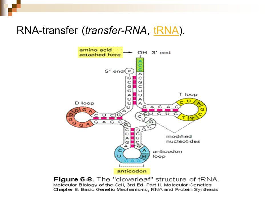 RNA-transfer (transfer-RNA, tRNA).tRNA