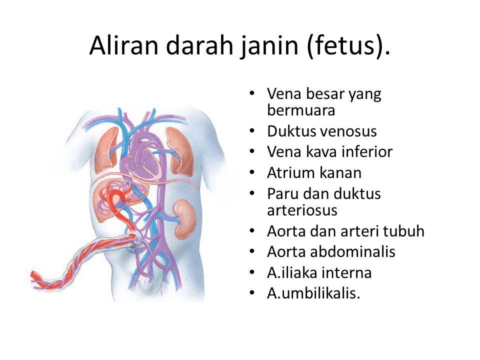 Aliran darah janin (fetus). Vena besar yang bermuara Duktus venosus Vena kava inferior Atrium kanan Paru dan duktus arteriosus Aorta dan arteri tubuh