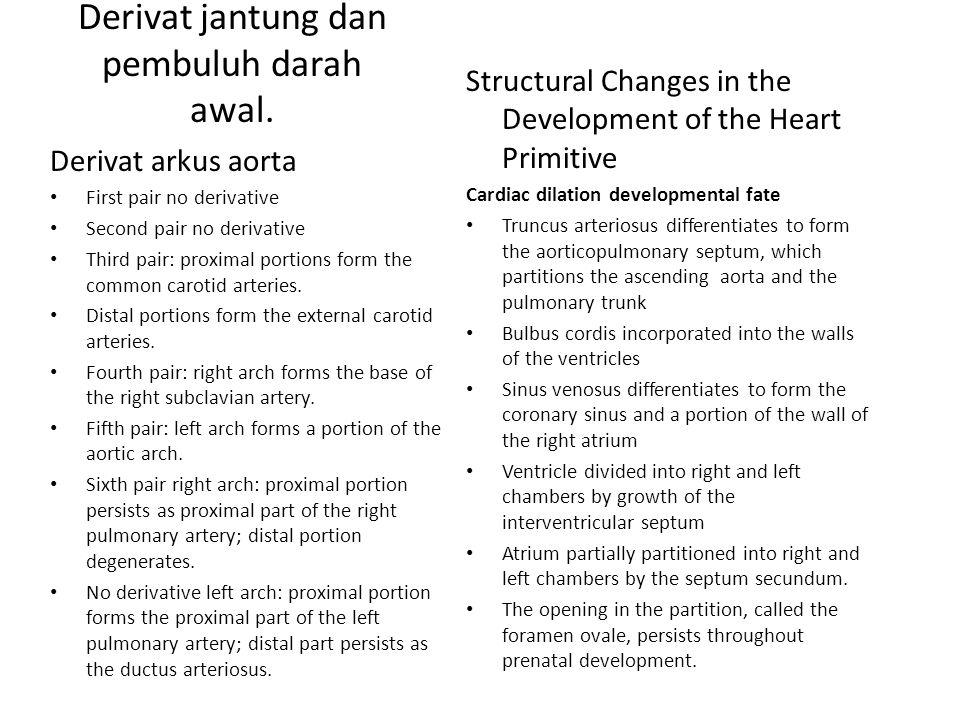 Derivat jantung dan pembuluh darah awal. Derivat arkus aorta First pair no derivative Second pair no derivative Third pair: proximal portions form the