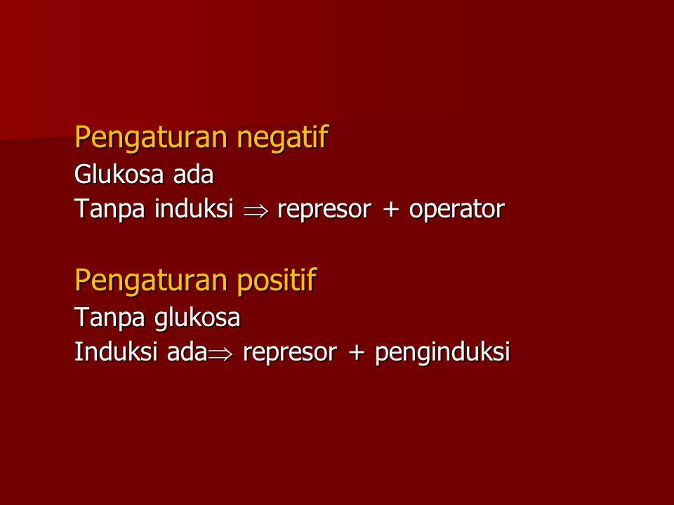 Pengaturan negatif Glukosa ada Tanpa induksi  represor + operator Pengaturan positif Tanpa glukosa Induksi ada  represor + penginduksi