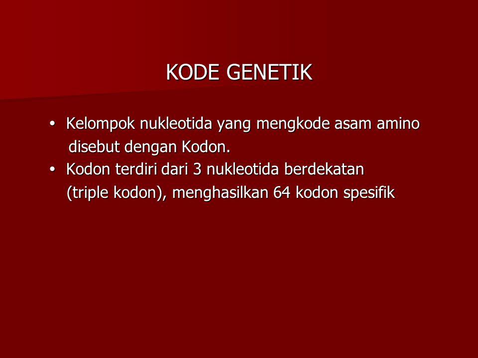 KODE GENETIK  Kelompok nukleotida yang mengkode asam amino  Kelompok nukleotida yang mengkode asam amino disebut dengan Kodon. disebut dengan Kodon.