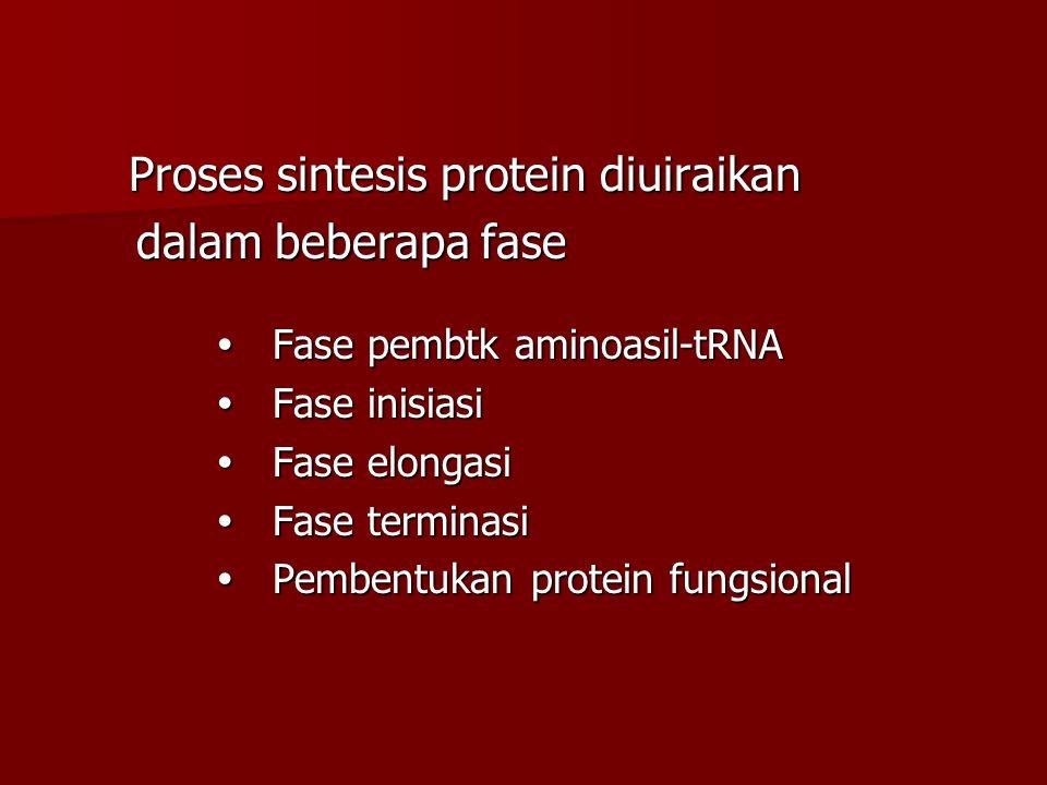 Proses sintesis protein diuiraikan Proses sintesis protein diuiraikan dalam beberapa fase dalam beberapa fase  Fase pembtk aminoasil-tRNA  Fase pemb