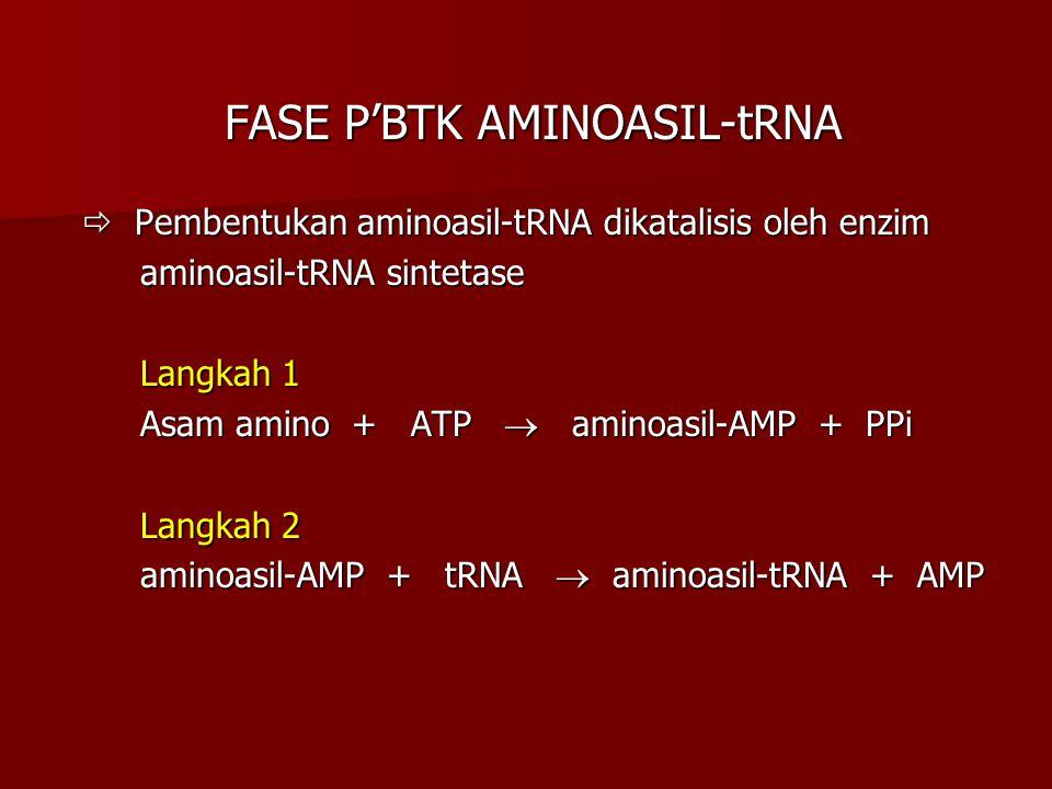 FASE P'BTK AMINOASIL-tRNA FASE P'BTK AMINOASIL-tRNA  Pembentukan aminoasil-tRNA dikatalisis oleh enzim  Pembentukan aminoasil-tRNA dikatalisis oleh