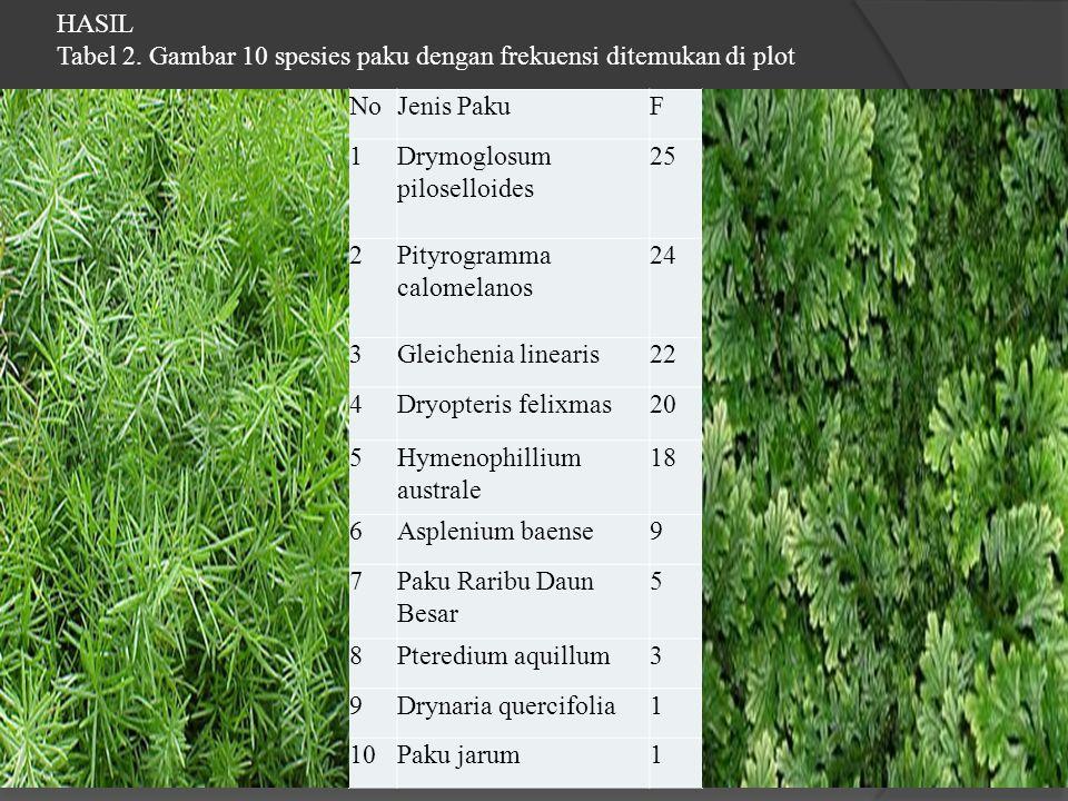 NoJenis PakuF 1Drymoglosum piloselloides 25 2Pityrogramma calomelanos 24 3Gleichenia linearis22 4Dryopteris felixmas20 5Hymenophillium australe 18 6As