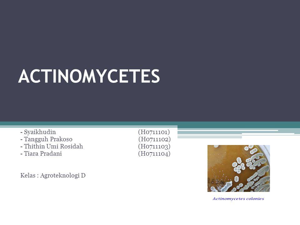 ACTINOMYCETES - Syaikhudin(H0711101) - Tangguh Prakoso (H0711102) - Thithin Umi Rosidah(H0711103) - Tiara Pradani(H0711104) Kelas : Agroteknologi D