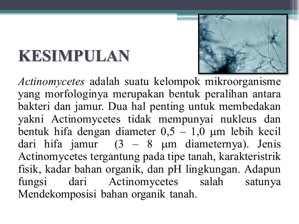 KESIMPULAN Actinomycetes adalah suatu kelompok mikroorganisme yang morfologinya merupakan bentuk peralihan antara bakteri dan jamur. Dua hal penting u