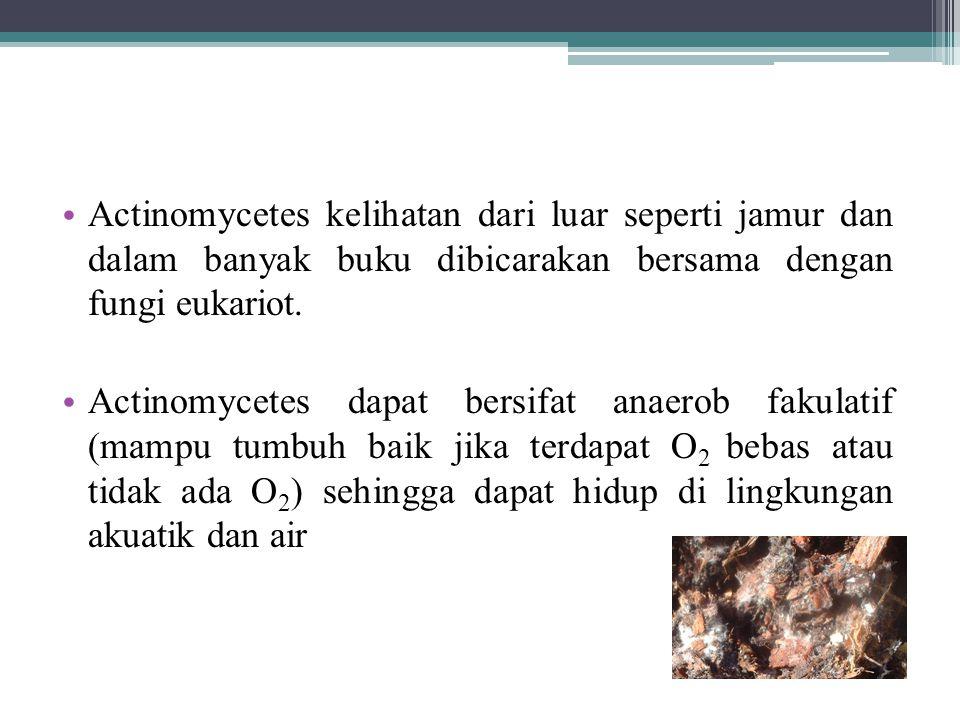 Actinomycetes kelihatan dari luar seperti jamur dan dalam banyak buku dibicarakan bersama dengan fungi eukariot. Actinomycetes dapat bersifat anaerob