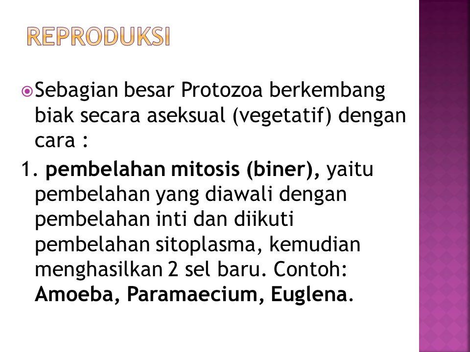  Sebagian besar Protozoa berkembang biak secara aseksual (vegetatif) dengan cara : 1.