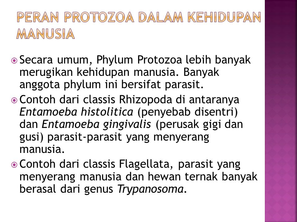  Secara umum, Phylum Protozoa lebih banyak merugikan kehidupan manusia.