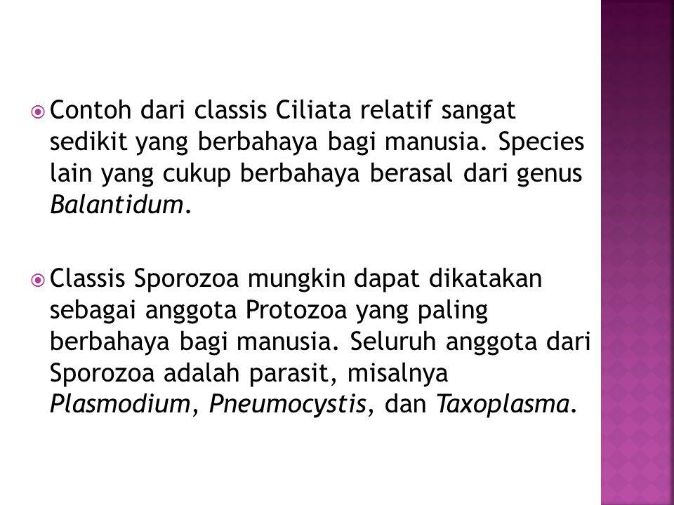  Contoh dari classis Ciliata relatif sangat sedikit yang berbahaya bagi manusia.