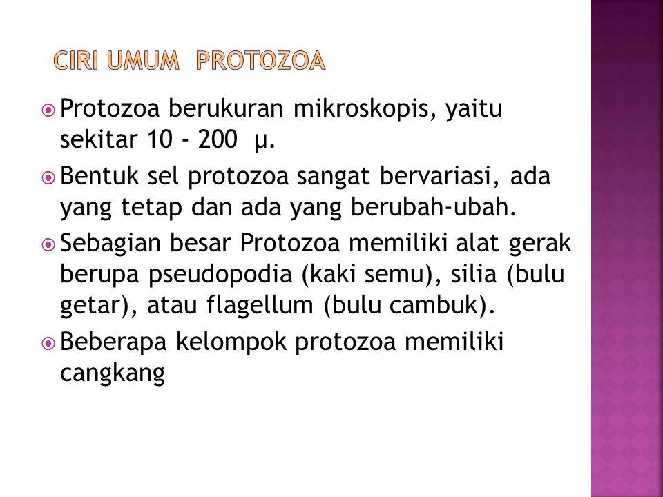  Protozoa berukuran mikroskopis, yaitu sekitar 10 - 200 µ.