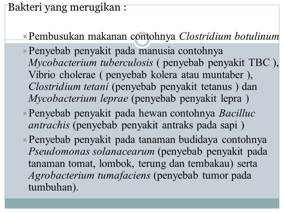 Bakteri yang merugikan :  Pembusukan makanan contohnya Clostridium botulinum  Penyebab penyakit pada manusia contohnya Mycobacterium tuberculosis (