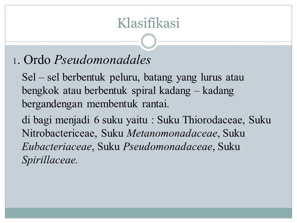 Klasifikasi 1. Ordo Pseudomonadales Sel – sel berbentuk peluru, batang yang lurus atau bengkok atau berbentuk spiral kadang – kadang bergandengan memb