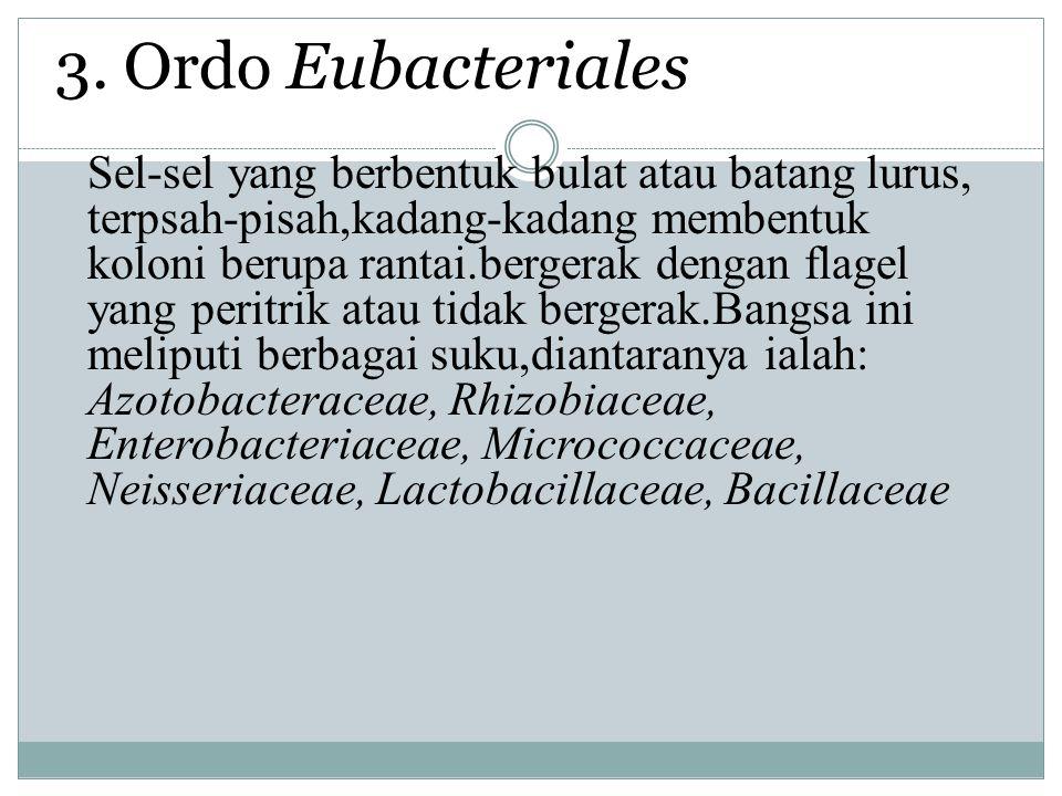 3. Ordo Eubacteriales Sel-sel yang berbentuk bulat atau batang lurus, terpsah-pisah,kadang-kadang membentuk koloni berupa rantai.bergerak dengan flage