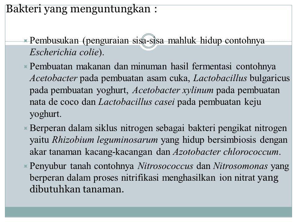 Bakteri yang menguntungkan :  Pembusukan (penguraian sisa-sisa mahluk hidup contohnya Escherichia colie).  Pembuatan makanan dan minuman hasil ferme