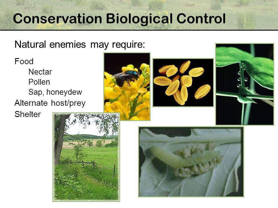 Natural enemies may require: Food Nectar Pollen Sap, honeydew Alternate host/prey Shelter Conservation Biological Control