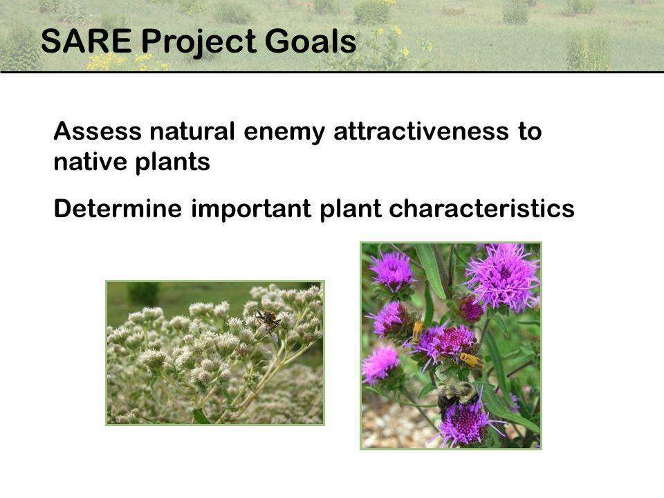 Assess natural enemy attractiveness to native plants Determine important plant characteristics SARE Project Goals