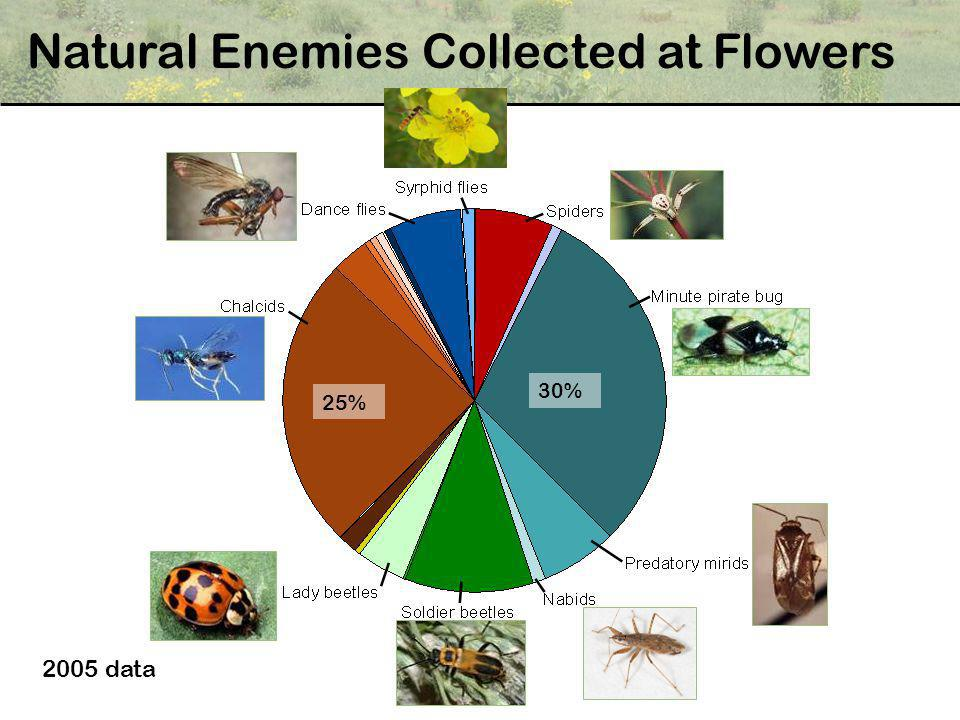 Natural Enemies Collected at Flowers 30% 25% 2005 data