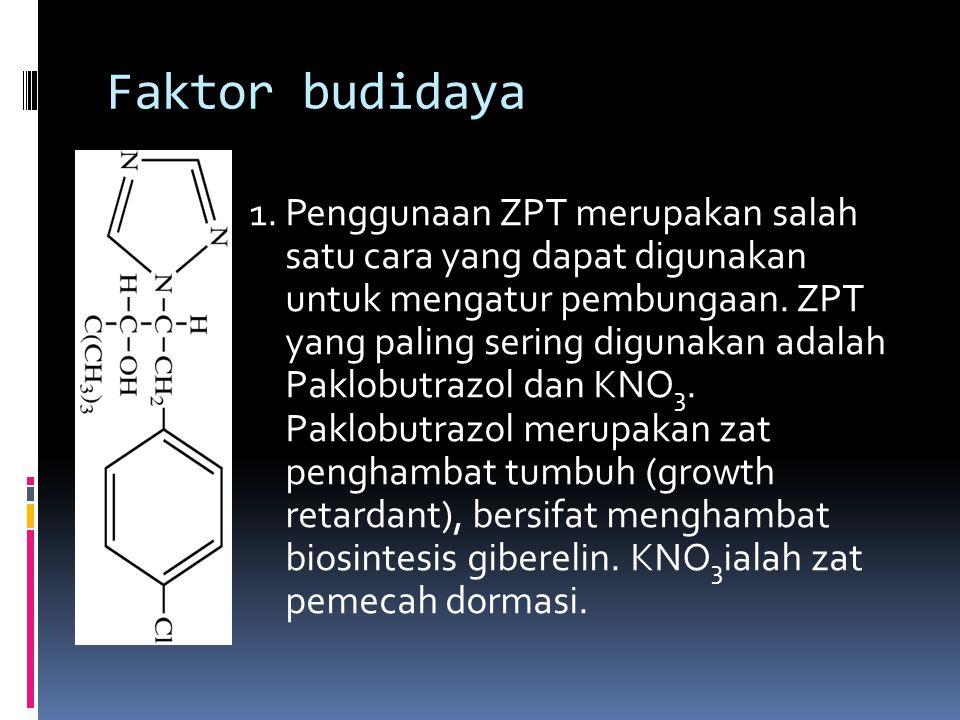 Faktor budidaya 1. Penggunaan ZPT merupakan salah satu cara yang dapat digunakan untuk mengatur pembungaan. ZPT yang paling sering digunakan adalah Pa