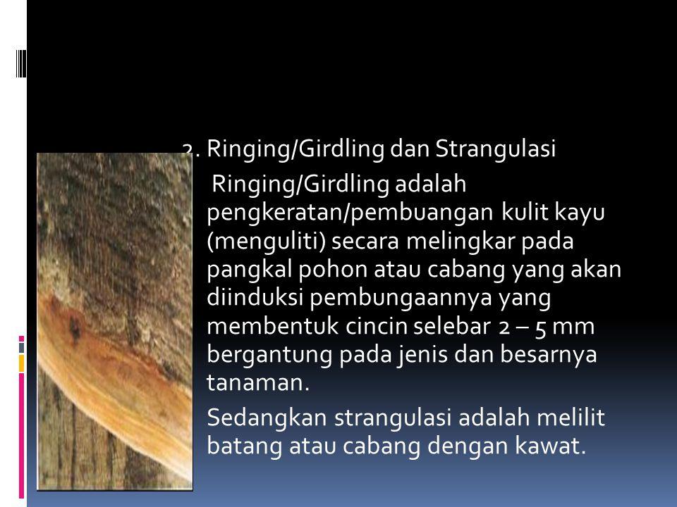 2. Ringing/Girdling dan Strangulasi Ringing/Girdling adalah pengkeratan/pembuangan kulit kayu (menguliti) secara melingkar pada pangkal pohon atau cab