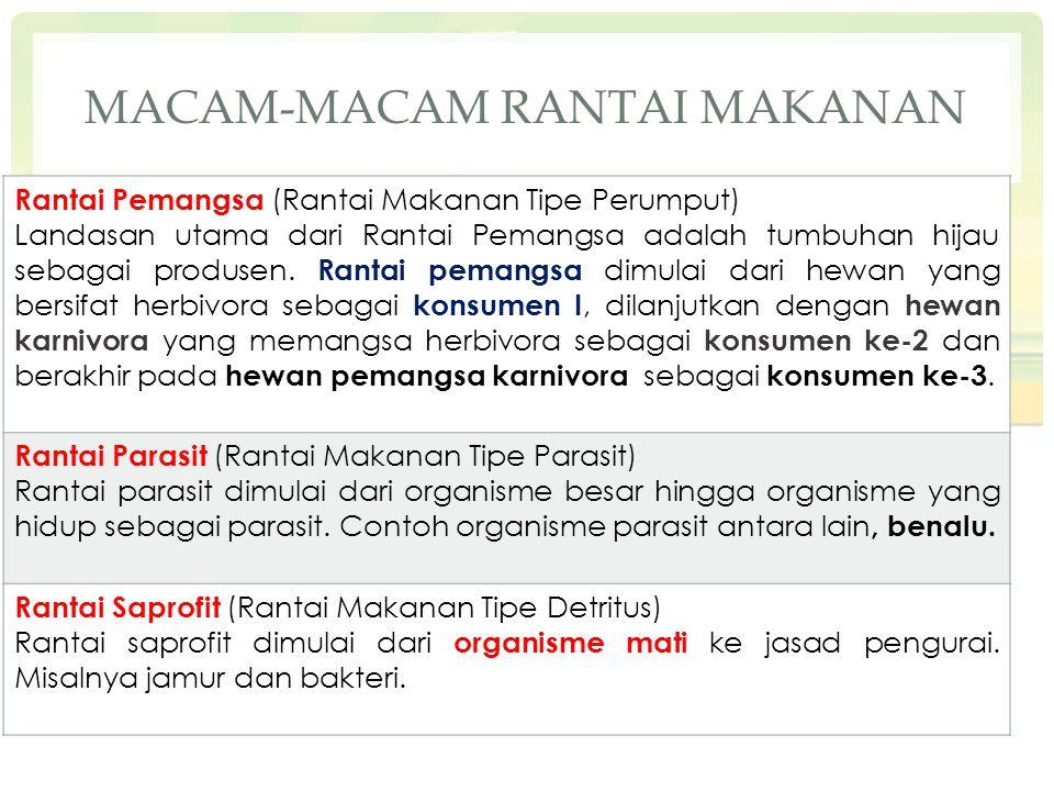 MACAM-MACAM RANTAI MAKANAN Rantai Pemangsa (Rantai Makanan Tipe Perumput) Landasan utama dari Rantai Pemangsa adalah tumbuhan hijau sebagai produsen.