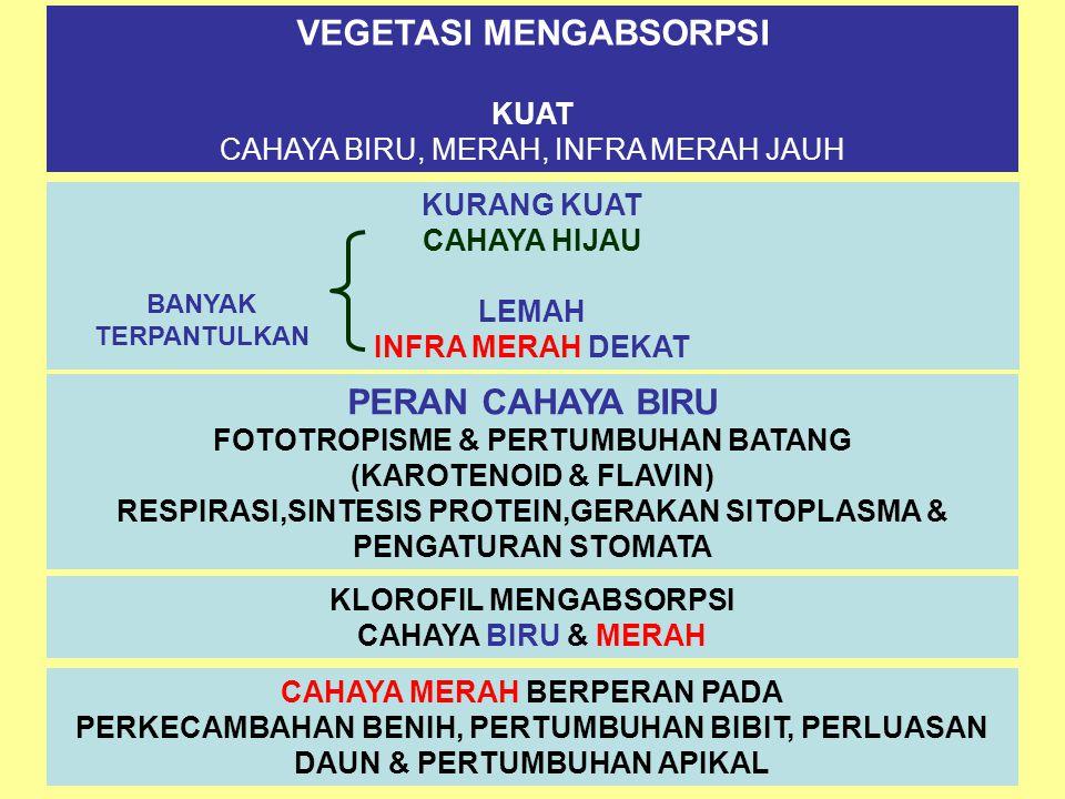 VEGETASI MENGABSORPSI KUAT CAHAYA BIRU, MERAH, INFRA MERAH JAUH KURANG KUAT CAHAYA HIJAU LEMAH INFRA MERAH DEKAT BANYAK TERPANTULKAN PERAN CAHAYA BIRU FOTOTROPISME & PERTUMBUHAN BATANG (KAROTENOID & FLAVIN) RESPIRASI,SINTESIS PROTEIN,GERAKAN SITOPLASMA & PENGATURAN STOMATA KLOROFIL MENGABSORPSI CAHAYA BIRU & MERAH CAHAYA MERAH BERPERAN PADA PERKECAMBAHAN BENIH, PERTUMBUHAN BIBIT, PERLUASAN DAUN & PERTUMBUHAN APIKAL