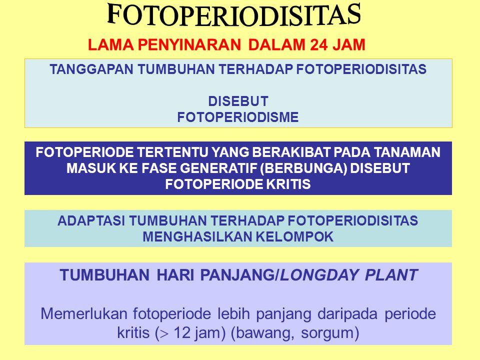 TUMBUHAN HARI PENDEK/SHORTDAY PLANT Memerlukan fotoperiode lebih pendek daripada periode kritis (  12 jam) (ketela rambat, kopi) TUMBUHAN NETRAL/DAYNEUTRAL PLANT tumbuhan tidak tanggap terhadap fotoperiode (tembakau, kentang, kacang hijau, kumis kucing) INTERMEDIATE Memerlukan fotoperiode yang tidak terlalu pendek/panjang (12 – 14 jam) (tebu, tephrosia) AMPHIPHOTOPERIODISM tanaman yang tetap vegetatif bila penyinaran intermediate, masuk ke fase generatif bila fotoperiode sangat pendek atau sangat panjang (tumbuhan kutub)