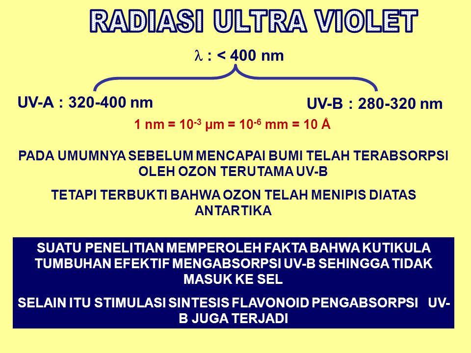: < 400 nm UV-A : 320-400 nm UV-B : 280-320 nm PADA UMUMNYA SEBELUM MENCAPAI BUMI TELAH TERABSORPSI OLEH OZON TERUTAMA UV-B TETAPI TERBUKTI BAHWA OZON TELAH MENIPIS DIATAS ANTARTIKA SUATU PENELITIAN MEMPEROLEH FAKTA BAHWA KUTIKULA TUMBUHAN EFEKTIF MENGABSORPSI UV-B SEHINGGA TIDAK MASUK KE SEL SELAIN ITU STIMULASI SINTESIS FLAVONOID PENGABSORPSI UV- B JUGA TERJADI 1 nm = 10 -3 µm = 10 -6 mm = 10 Å