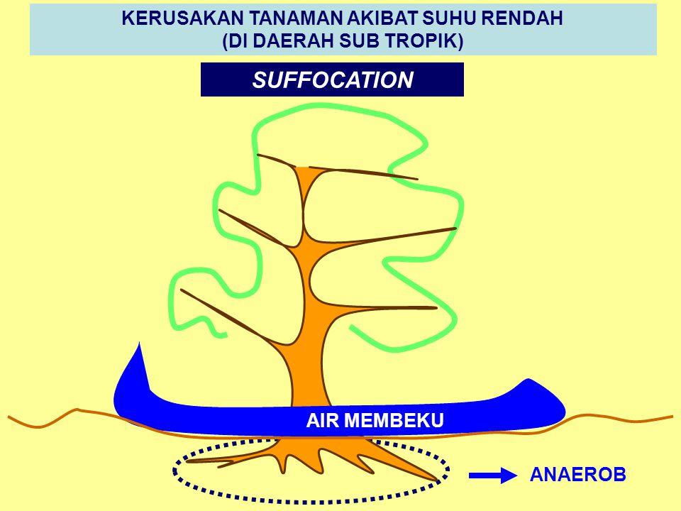 DESSICATION (DEFISIT AIR) SUHU ATMOSFER TINGGI SUHU RIZOSFER RENDAH EVAPOTRANSPIRASI > ABSORSI AIR