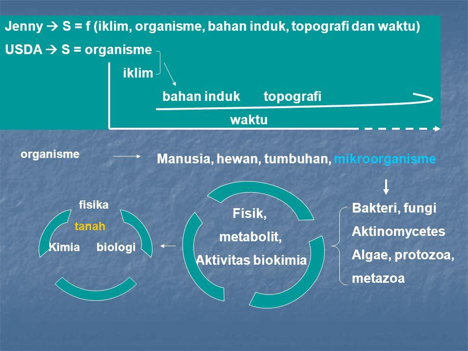 Jenny  S = f (iklim, organisme, bahan induk, topografi dan waktu) USDA  S = organisme iklim bahan induk topografi waktu organisme Manusia, hewan, tu