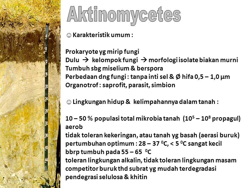 ☺ Karakteristik umum : Prokaryote yg mirip fungi Dulu  kelompok fungi  morfologi isolate biakan murni Tumbuh sbg miselium & berspora Perbedaan dng f