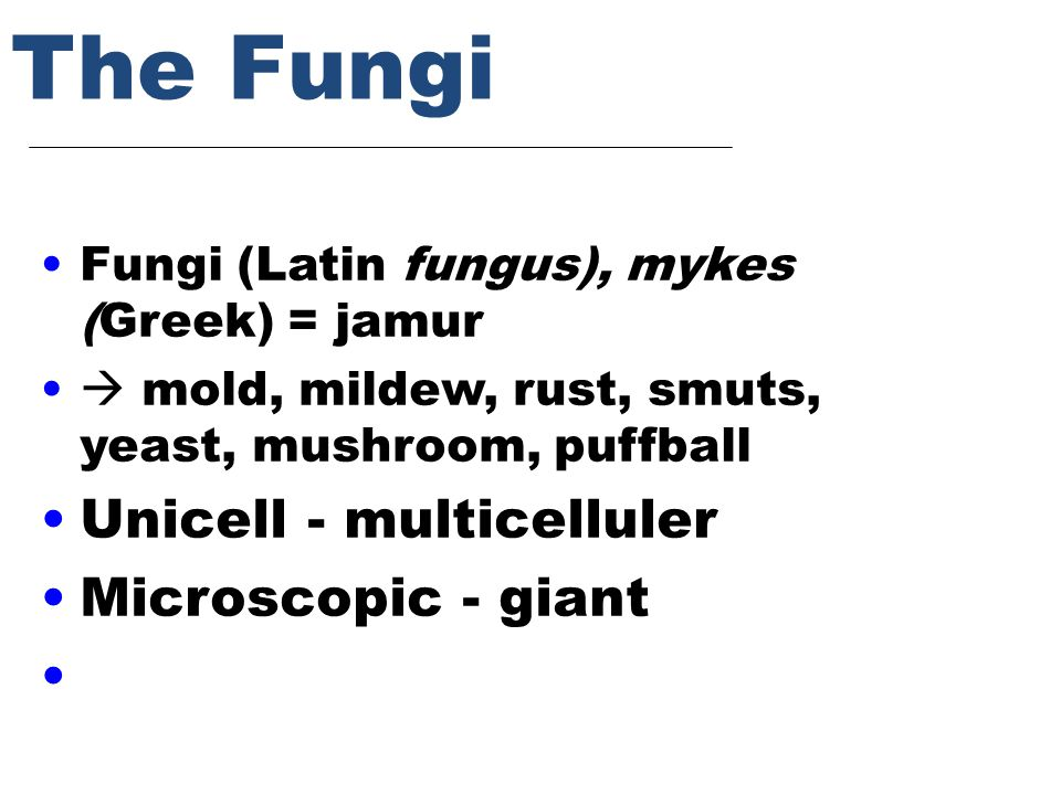 The Fungi Fungi (Latin fungus), mykes (Greek) = jamur  mold, mildew, rust, smuts, yeast, mushroom, puffball Unicell - multicelluler Microscopic - giant