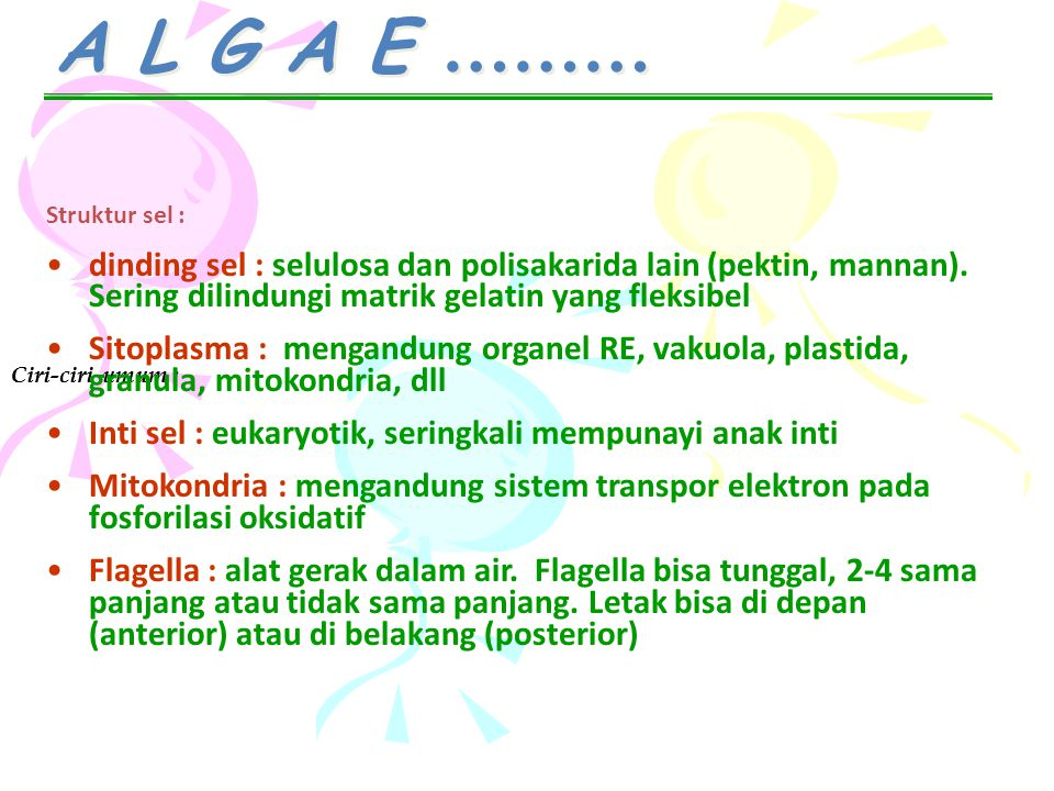 A L G A E ……… Ciri-ciri umum : Struktur sel : dinding sel : selulosa dan polisakarida lain (pektin, mannan). Sering dilindungi matrik gelatin yang fle