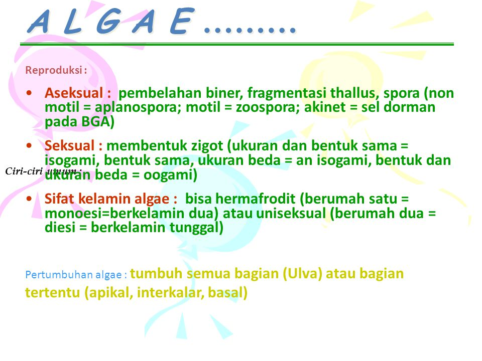 A L G A E ……… Ciri-ciri umum : Reproduksi : Aseksual : pembelahan biner, fragmentasi thallus, spora (non motil = aplanospora; motil = zoospora; akinet